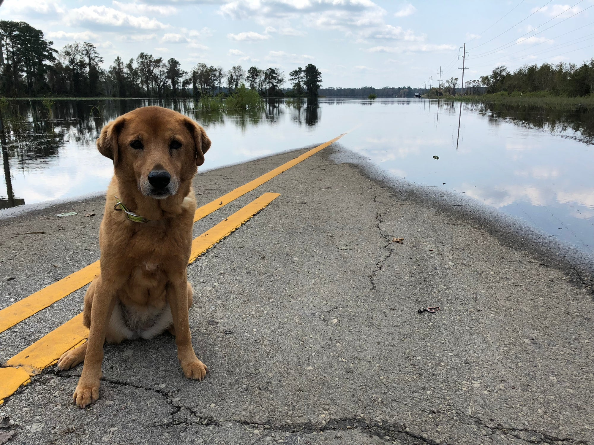 How to Keep Your Pets Safe During a Hurricane