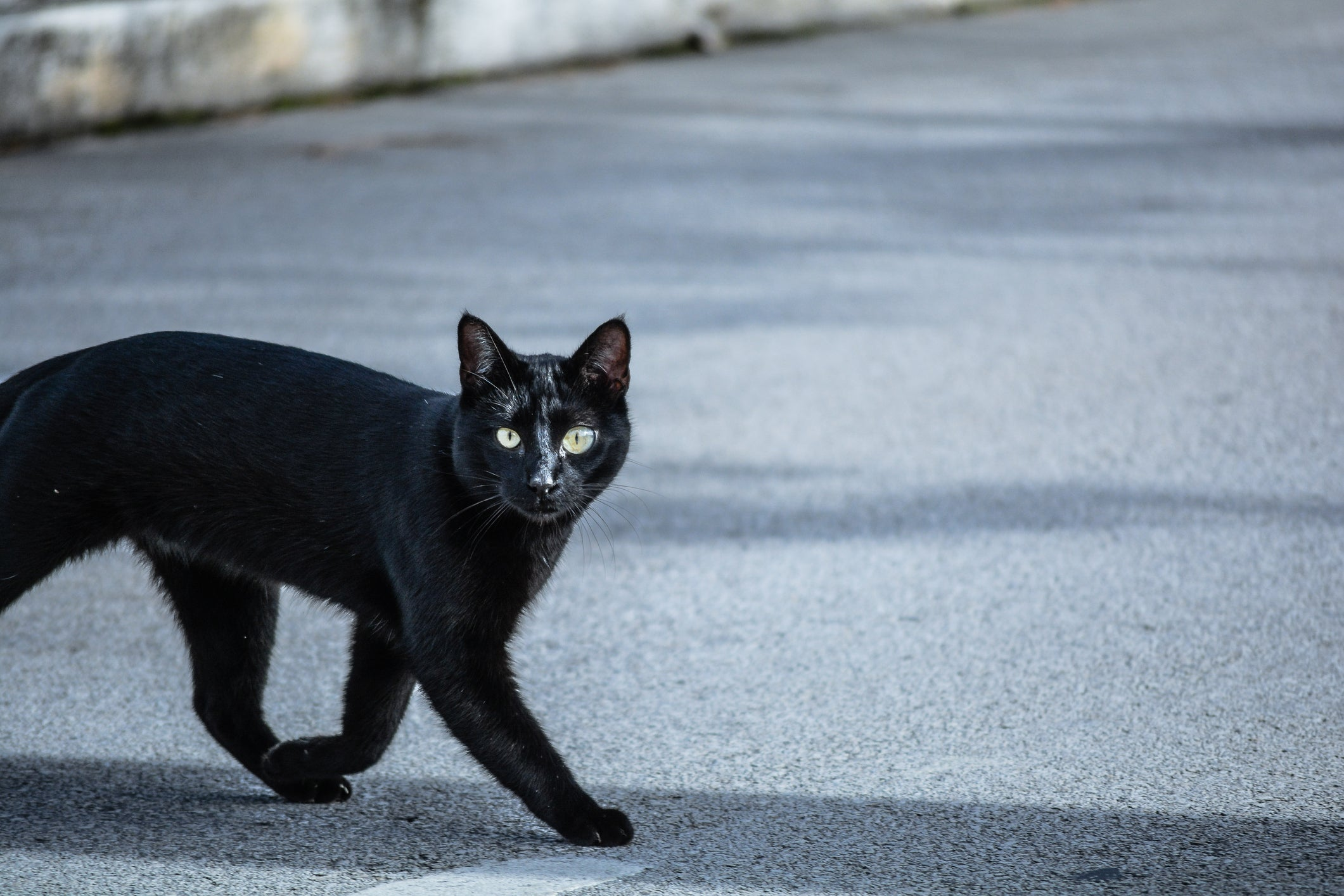 How to Keep your Black Cat Safe This Spooky Season