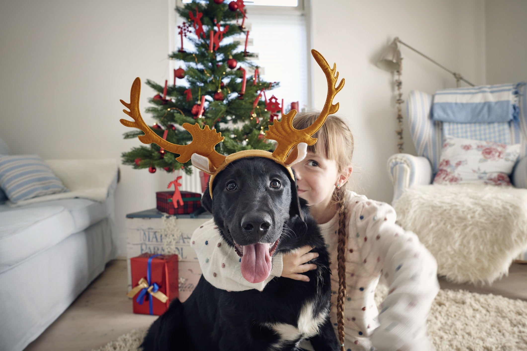 15 Pet Gifts For Pet Owners This Christmas image