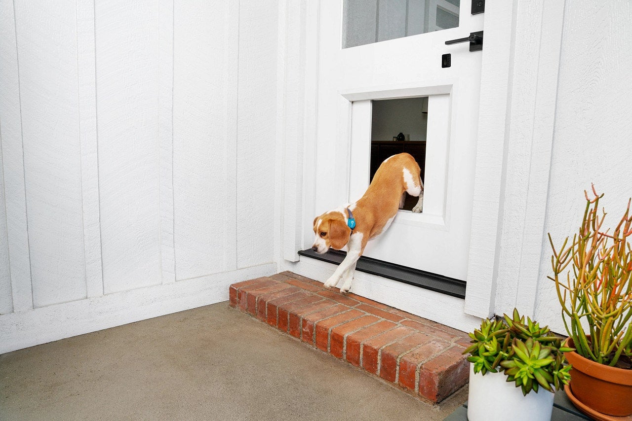 """The myQ Pet Portal Keeps You From Asking, """"Who Let the Dogs Out?"""""""