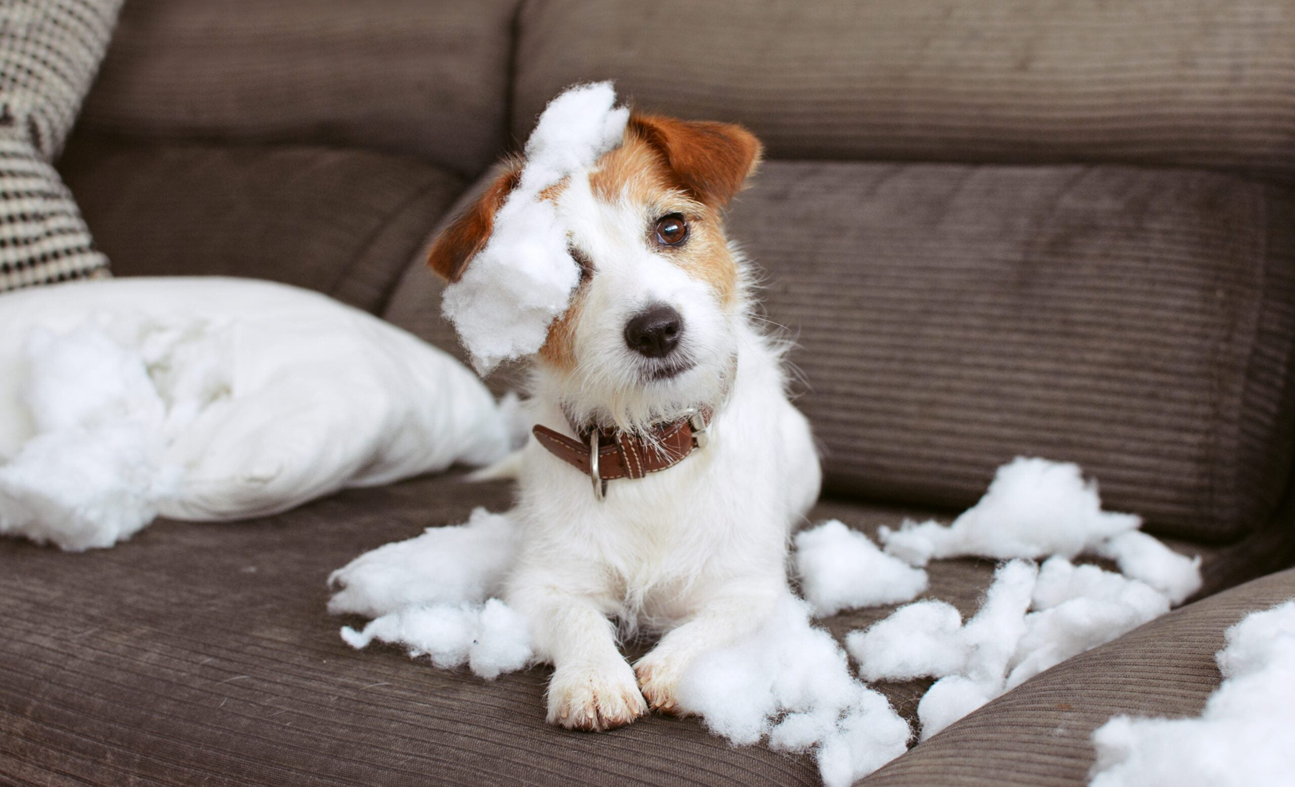 How to Ease Your Dog's Separation Anxiety After COVID